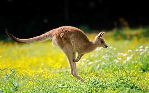 His opponent sent a kangaroo to Felföldi